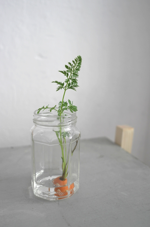 Carrot plant from top | Mimimou